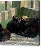 Cats 62 Acrylic Print by Joyce StJames