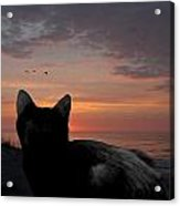 Cats 65 Acrylic Print