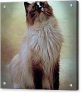 Cats 71 Acrylic Print by Joyce StJames