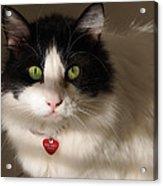 Cat's Eye Acrylic Print