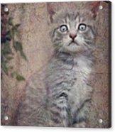 Cat's Eyes #02 Acrylic Print