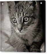 Cat's Eyes #05 Acrylic Print