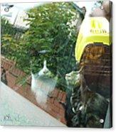 Cats Leaving Acrylic Print