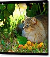 Cat's Mountain Summer Acrylic Print by Susanne Still