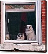 Cats On A Sill Acrylic Print by Randi Shenkman