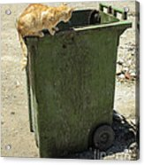 Cats On And In Garbage Container Acrylic Print