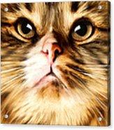 Cat's Perception Acrylic Print