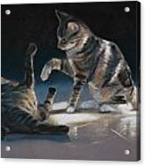 Cats Playing Acrylic Print