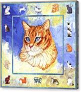 Cats Purrfection Five - Orange Tabby Acrylic Print
