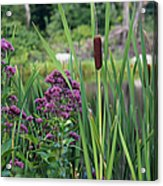 Cattail Pond II Acrylic Print