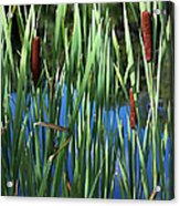 Cattail Pond In Watercolor Acrylic Print
