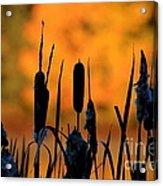 Cattail Silhouette Acrylic Print