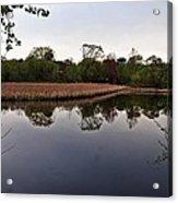 Cattail Swamp I Acrylic Print