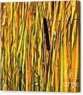 Cattails Aflame Acrylic Print