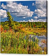 Cattails And Clouds Acrylic Print
