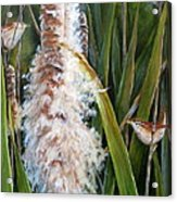 Cattails And Wrens Acrylic Print