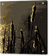 Cattails At Sunset Acrylic Print