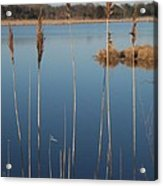 Cattails Cape May Point Nj Acrylic Print