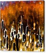 Cattails Acrylic Print