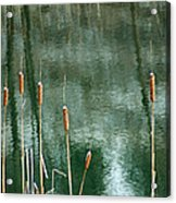 Cattails On Green Acrylic Print