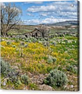 Cattle Camp Acrylic Print