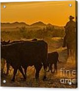 Cattle Drive 10 Acrylic Print