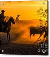 Cattle Drive 14 Acrylic Print