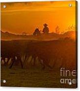 Cattle Drive 20 Acrylic Print