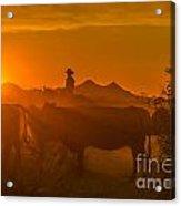 Cattle Drive 21 Acrylic Print