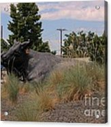 Cattle In Downtown Denver Acrylic Print