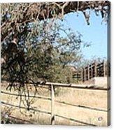 Cattle Ramp Acrylic Print