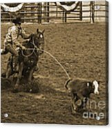 Cattle Roping In Colorado Acrylic Print