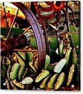 Caught In A Cactus Patch-sold Acrylic Print