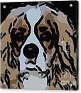 Cavalier Spaniel Acrylic Print