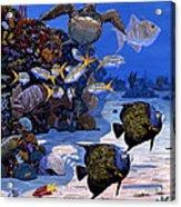 Cayman Reef Re0024 Acrylic Print