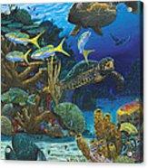 Cayman Turtles Re0010 Acrylic Print
