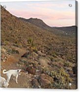 Ceaser, Mocha, And Chico In The Cerbat Mountains Acrylic Print
