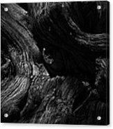 Cedar Burl Number Two Acrylic Print