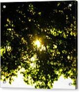 Cedar Filtered Sun Acrylic Print