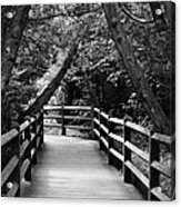 Cedar Pathway Acrylic Print
