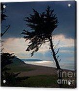 Cedar Silhouettes Acrylic Print