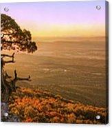 Cedar Tree Atop Mt. Magazine - Arkansas - Autumn Acrylic Print