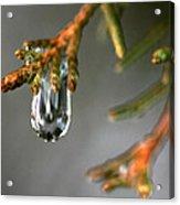 Cedar Tree Drips Acrylic Print