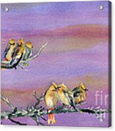 Bohemian Waxwings Birds Acrylic Print