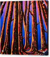 Cedars In Stanley Park Acrylic Print