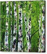 Celadon Spring Acrylic Print