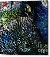 Celebration Of The Peacock #2 Acrylic Print