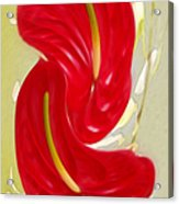 Celebration - Red Anthurium And White Orchids  Acrylic Print