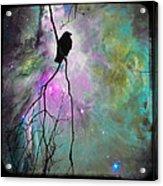 Celestial Dream Of Crow Acrylic Print