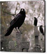 Cemetery Crows Acrylic Print